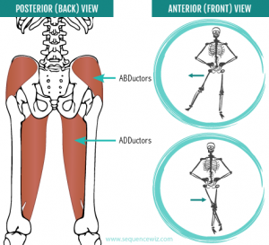 Hip Adductors & Hip Abductors - Read carefully on these 2 different terms. ADDuctors and ABDuctors.Both are different. ADDuctors is the inner thigh of our legs , and ABDuctors is the outer thigh .