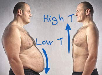 Testosterone Optimization System- The Normal Rate of Testosterone